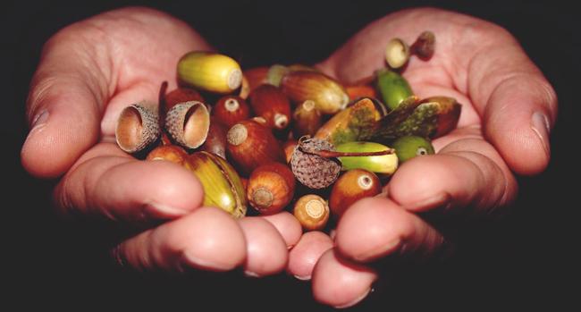 Le gland, un fruit à valoriser - La Dépêche de Kabylie